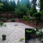 Renowacja ogrodu, formowanie jałowca