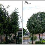 cięcie za dużych drzew